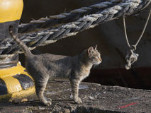 Gray-brown cat on a sea berth Royalty Free Stock Image