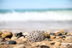Gray and Brown Pebbles Near Sea Royalty Free Stock Photos