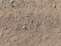 Gray-brown soil Stock Image