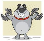 Gray Bulldog Cartoon Mascot Character avec des lunettes de soleil établissant avec des haltères Photographie stock libre de droits