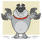 Gray Bulldog Cartoon Mascot Character con las gafas de sol que se resuelve con pesas de gimnasia Fotografía de archivo libre de regalías