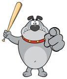 Gray Bulldog Cartoon Mascot Character enojado que celebra un palo y señalar Fotografía de archivo libre de regalías