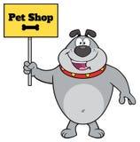 Gray Bulldog Cartoon Mascot Character que lleva a cabo una muestra con la tienda de animales del texto Imagen de archivo libre de regalías
