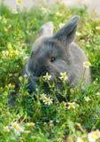 Gray Bunny Stockbilder