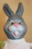 Gray bunny looking for you Royalty Free Stock Images