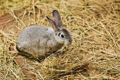 Gray bunny Stock Photo