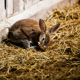 Gray bunny Stock Images