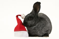 Gray bunny rabbit Stock Images