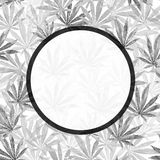 Gray Cannabis leaves on white background Stock Image