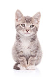 Gray cat. Isolated on white background Stock Photos