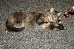 Gray cat. Royalty Free Stock Photo