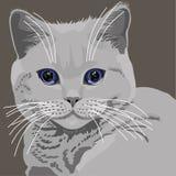 Gray Cat Imagens de Stock