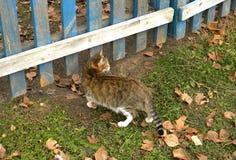 Gray Cat Immagini Stock