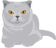A gray cat Stock Image