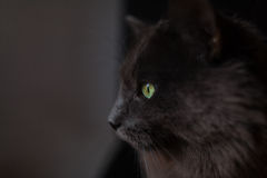 Gray Cat Stockfotos
