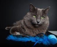 Gray Cat Image libre de droits
