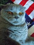 Gray Cat Photo stock