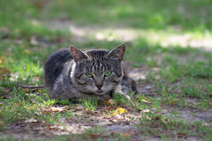 Gray Cat Stockfotografie