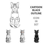 Gray cat.Animals single icon in cartoon style vector symbol stock illustration web. Stock Photography
