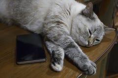 Gray cat asleep lying head on black smartphone. Gray cat asleep, lying head on black smartphone royalty free stock image