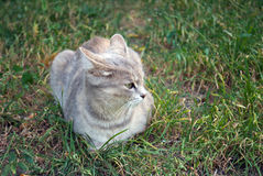 gray cat on the autumn grass Stock Photography