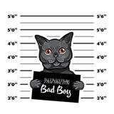 Gray cat bad boy. Cat criminal. Arrest photo. Police records. Cat prison. Police mugshot background. Vector. Gray cat bad boy. Cat criminal. Arrest photo Stock Image