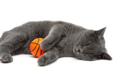 Gray cat with a ball sleeping on a white background Stock Images