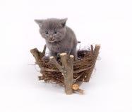 Gray cat and bird's nest Royalty Free Stock Photos