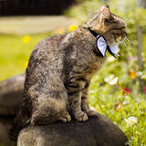 Gray cat in bow tie Stock Images