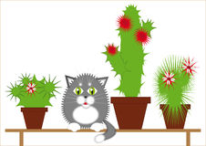 Gray cat among the cacti. Gray cat sitting on a bench among the flowering cactuses Royalty Free Stock Photo