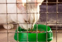 A gray cat in a cage eats dry food from a bowl stock photos