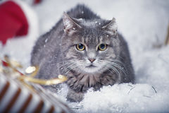 Gray cat in a chair Stock Photography