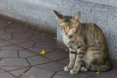 Gray Cat che dorme sulla via Fotografia Stock Libera da Diritti