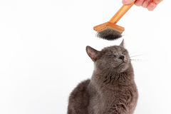 Gray cat combed wool brush on the head