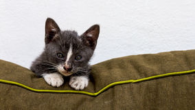 Gray cat on the couch Royalty Free Stock Images