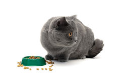 Gray cat eating food from a bowl green on a white background Stock Photo
