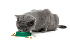 Gray cat eating food from a bowl Stock Photo
