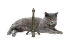 Gray Cat and Eiffel Tower on a white background Stock Photo