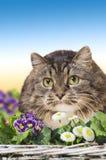 Gray Cat en flores del jardín Foto de archivo libre de regalías