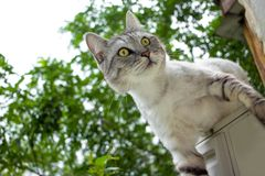 Gray cat with expressive eyes climb on the green garden blurred background. Gray cat with expressive looking on a blurred leaves background royalty free stock images