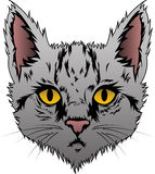 Gray Cat Face. Vector illustration of little gray kitten Stock Photography