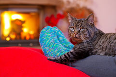 Gray Cat  and a fireplace. Woman relaxes by warm fire and warming up her feet in woollen socks. Winter and Christmas holidays concept.Seated Gray Cat with Santa Royalty Free Stock Photography