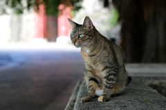 Gray cat frowning Royalty Free Stock Photography