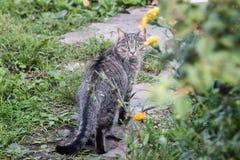 Gray Cat In Grass foto de archivo