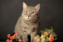 Gray cat on gray background with flowers Royalty Free Stock Photos
