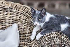 Gray cat on the Greek island Royalty Free Stock Photo