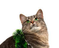 Gray cat with green eyes in Christmas tinsel looking up Stock Photography