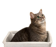 Gray cat with green eyes sitting in basket and looking up Stock Images
