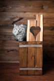 Gray cat and heart. Gray cat with blue ribbon and wooden heart Royalty Free Stock Photography