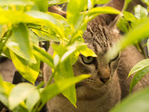 Gray Cat Hiding. In The Shadows of Trees Stock Photography